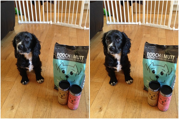 Pooch and Mutt Dog food