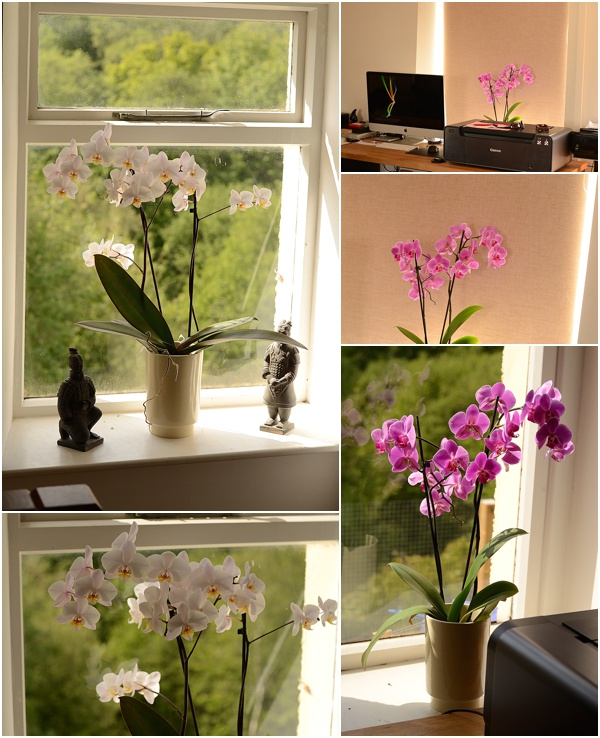 Bringing Nature Indoors - Keeping Orchids Alive