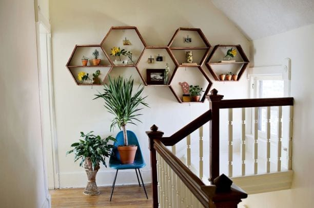 House plants in hexagonal shelves