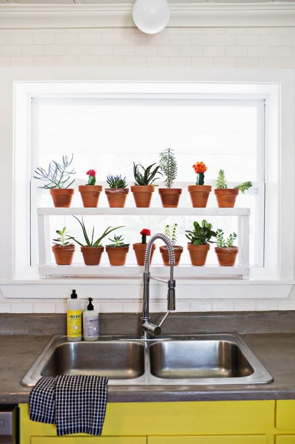 House plants on a kitchen shelf