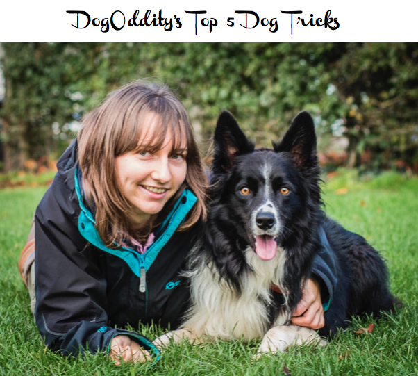 Guest Post from Dog Oddity - Top 5 Dog Tricks - Two Hearts One Roof