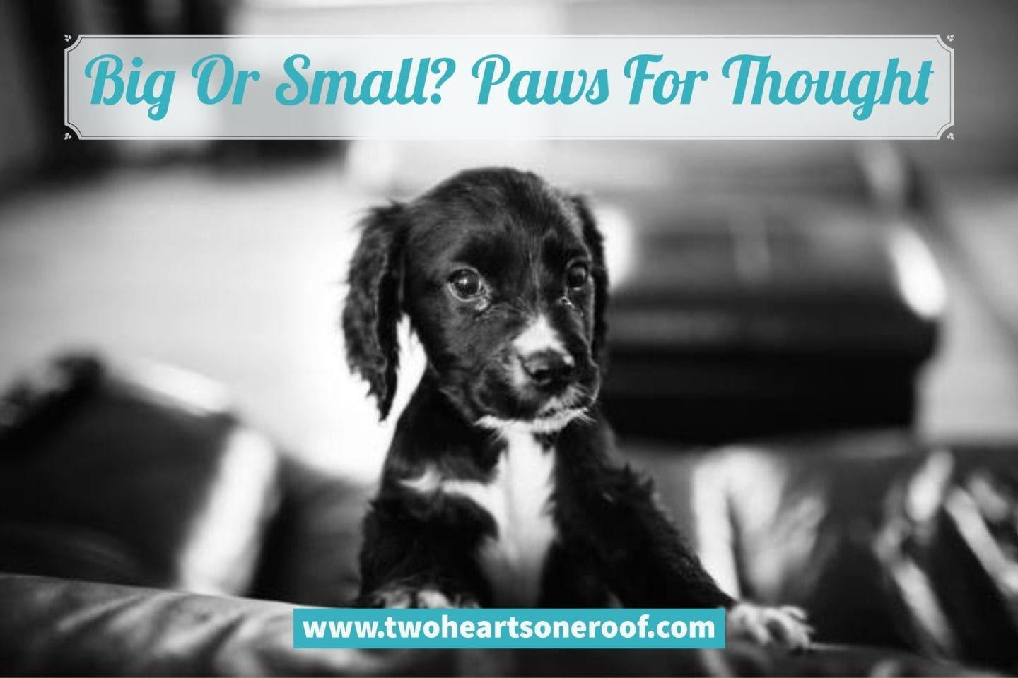 Big Or Small? Paws For Thought – What Pet Is Best For Your Family