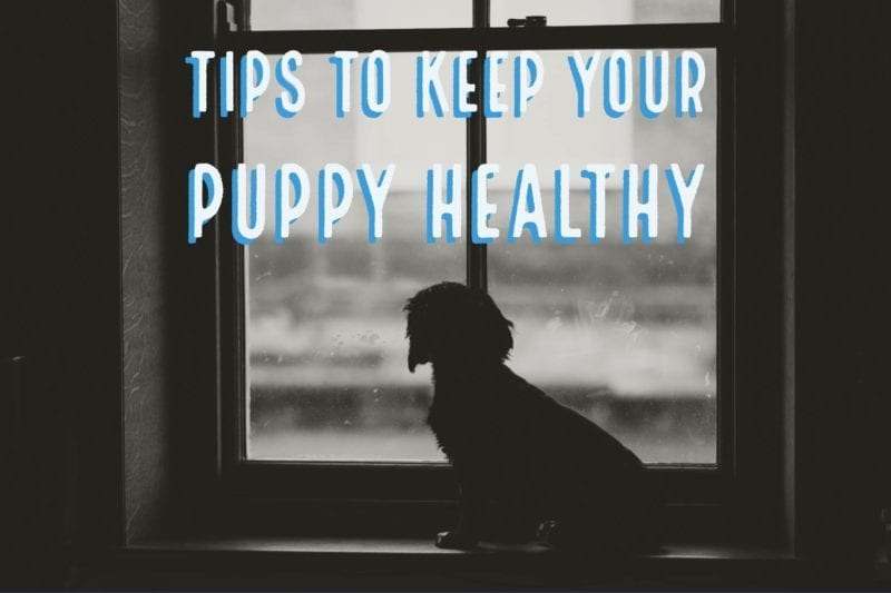 tips for looking after a puppy